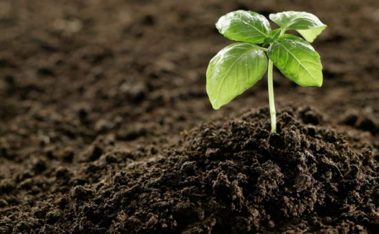 Dalyan Akdeniz Construction. Dalyan Fertilizer Prices And Fertilizer Sale.